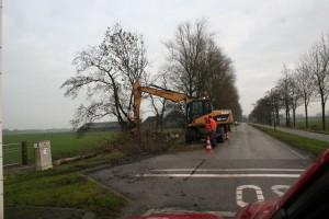 bomenkap Ljouwterdyk 004