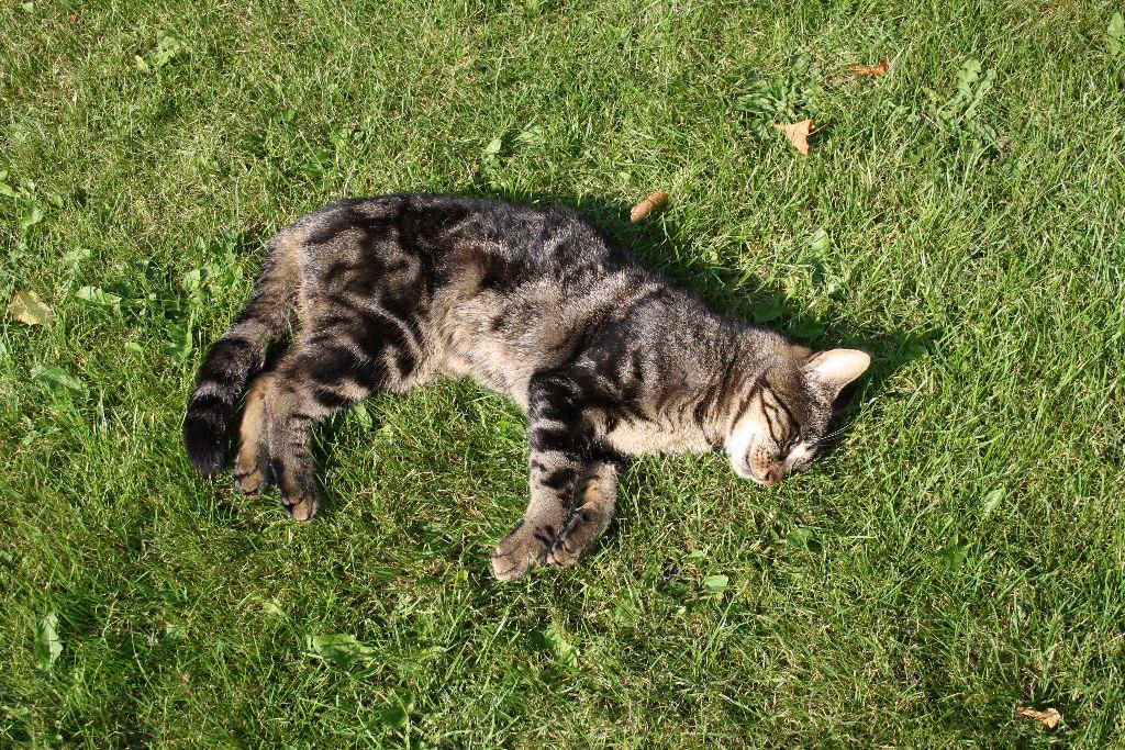 Dode kat gevonden op Bitgumerdyk