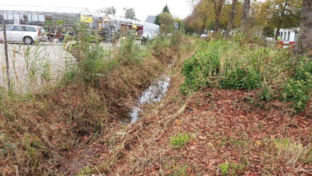 Groenvak Bitgumerdyk wordt gras