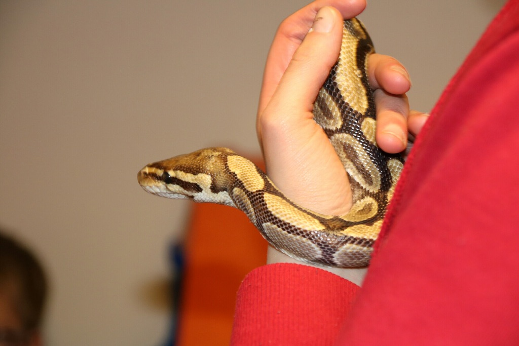 Marsumer Jeugd maakt kennis met reptielen