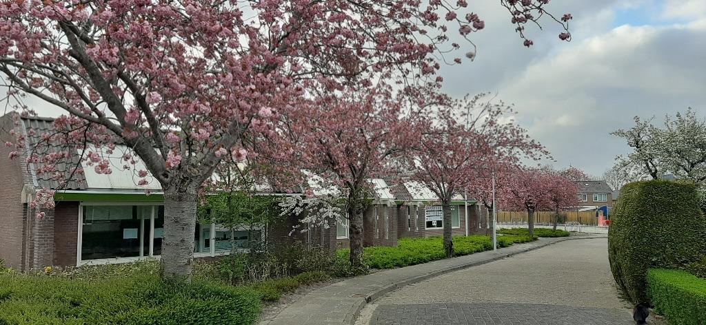 Bomen school in bloei